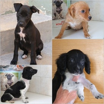 Blackie, Brownie & Henry waiting for homes at Gozo SPCA