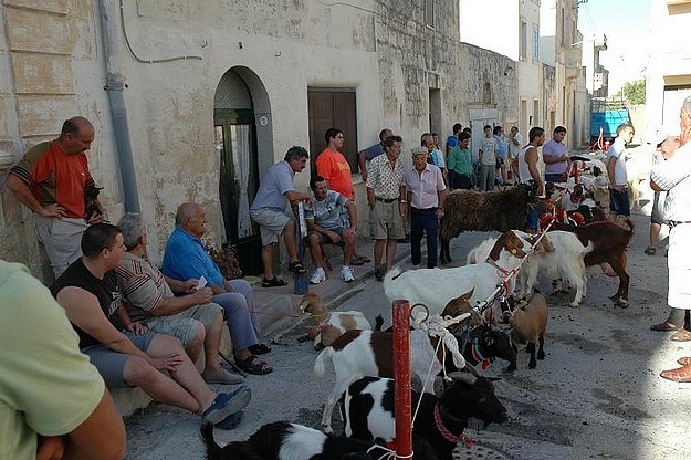 Xewkija's annual Animal Show taking place next month