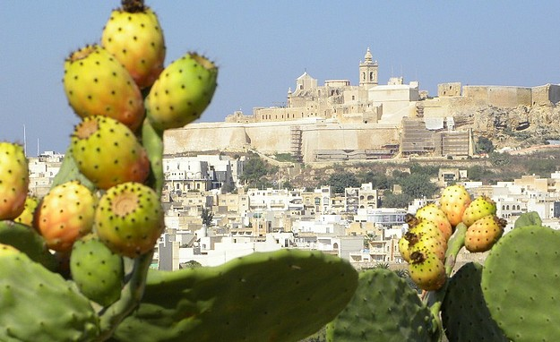 Gozo meetings this coming Sunday for PN and PL Parties