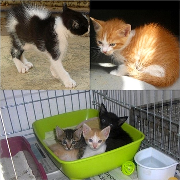 Adorable kittens waiting for homes at Gozo SPCA in Victoria