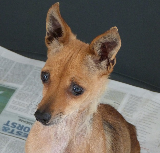 Xerri is at the Gozo SPCA waiting for her own loving home