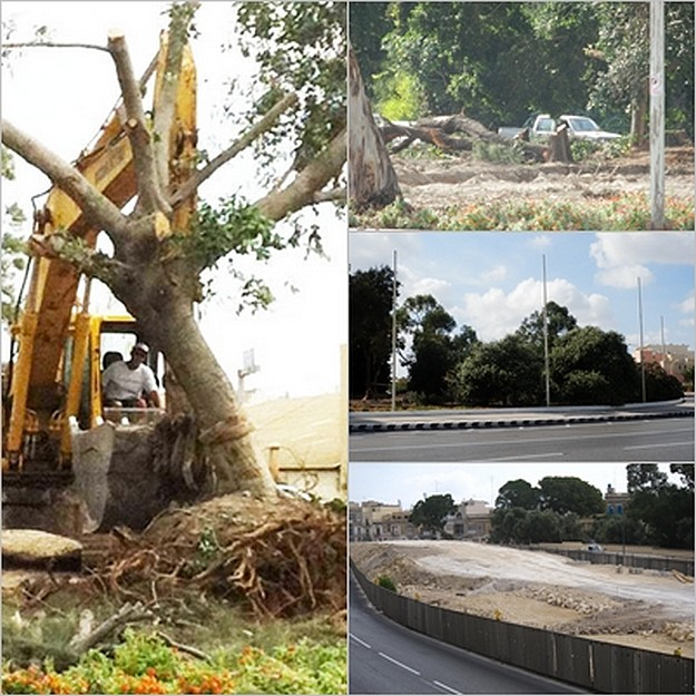 Destruction of trees continues unabated - FAA Tree Group