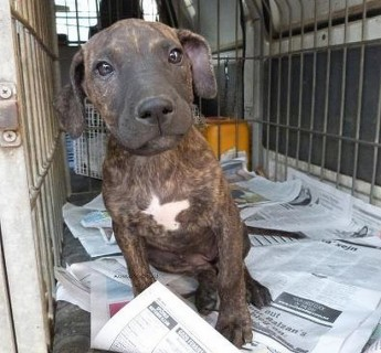 Gozo SPCA appeals for help to trace owner of this puppy