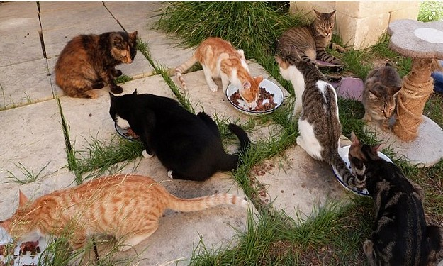 Help dogs and cats at the Gozo SPCA with a sponsorship