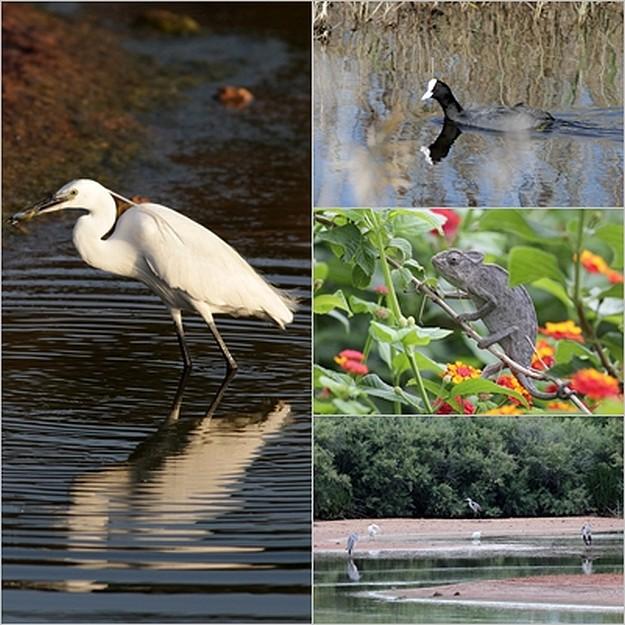 BirdLife invites public to visit Nature Reserves this weekend