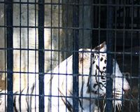 AD presents its proposals on the use of animals in circuses