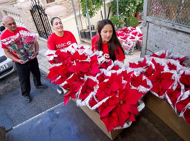 HSBC Malta employees sell over 2,000 poinsettias for charity