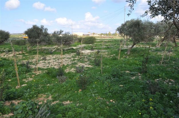 Gozo Ministry condemns the vandalism & theft of 39 trees