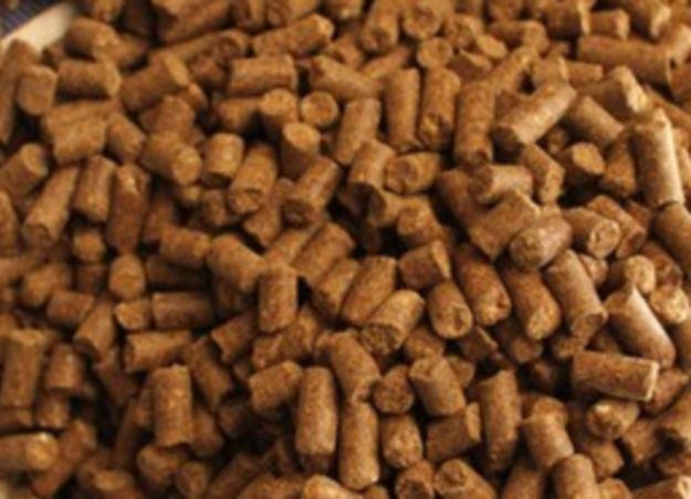 Processed animal proteins to be re-authorised in fish feed