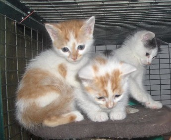 Playful kittens waiting for loving homes at the Gozo SPCA