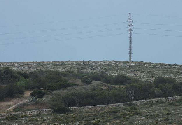 """FKNK defense of poachers is indefensible"" – BirdLife Malta"