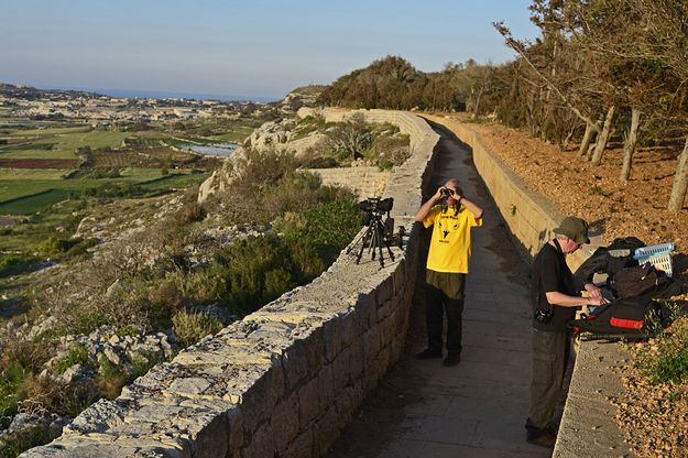895 illegal hunting incidents recorded in Malta alone - BLM