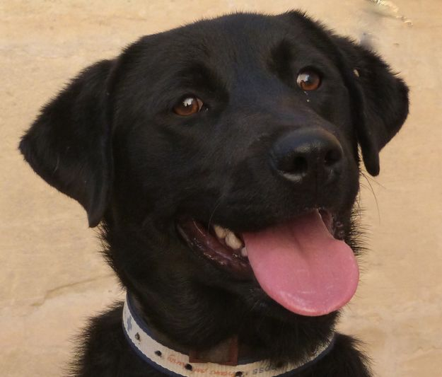 Gozo SPCA appeals for help to find owner of this lost dog