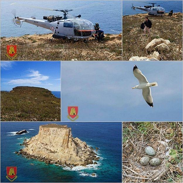 AFM Air Wing assists BirdLife Malta on the Island of Filfla