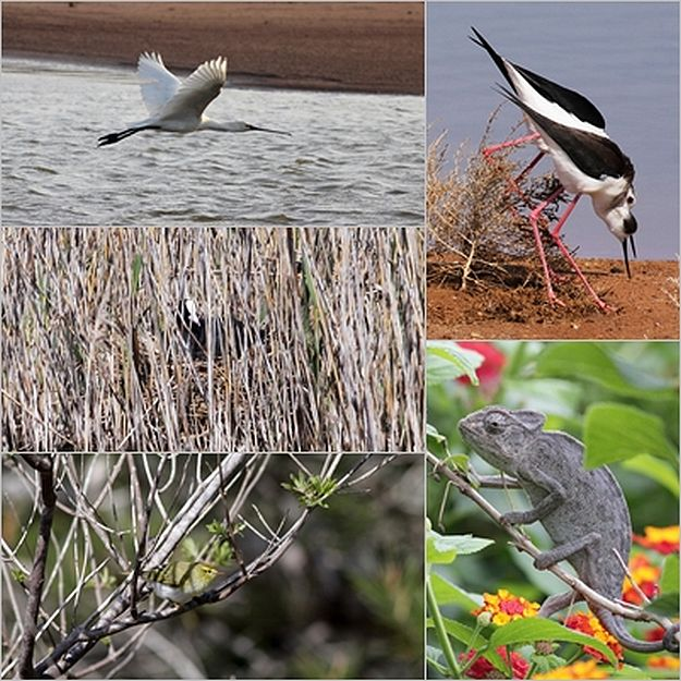 BirdLife Nature Reserves welcome visitors this weekend