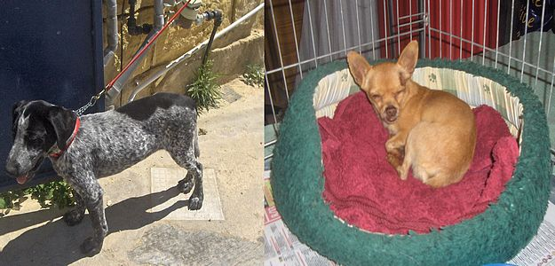 Gozo SPCA appeals for help to trace owners of these dogs