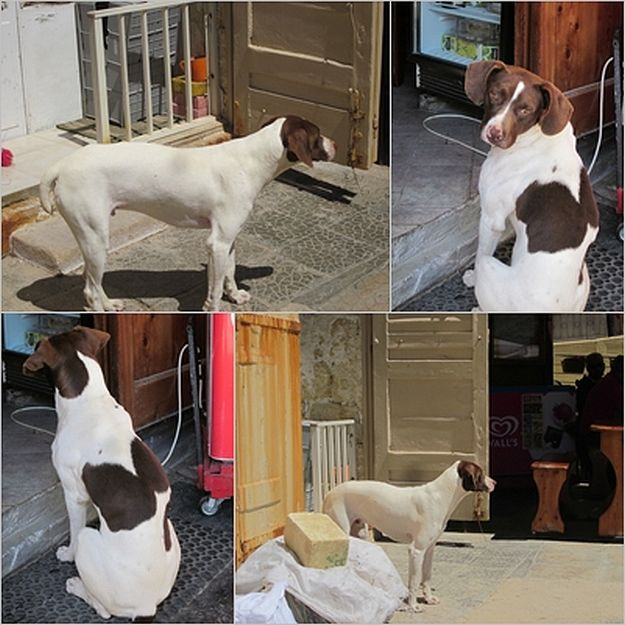 Gozo SPCA are appealing for help with 2 stray dogs in Xlendi