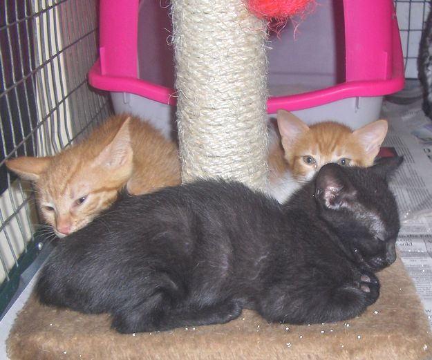 9 adorable kittens at Gozo SPCA in need of loving homes