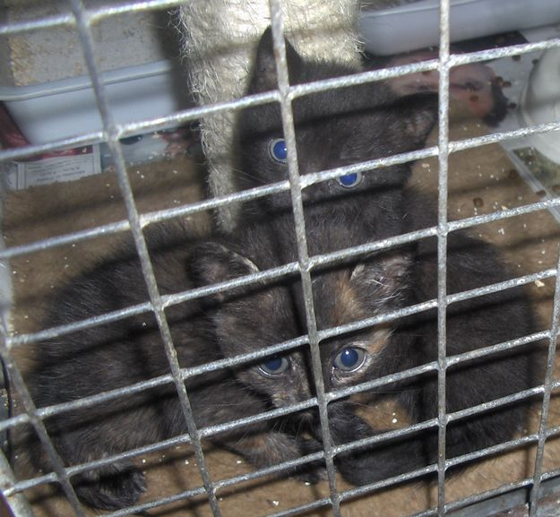 Sooty & Sweep are waiting for someone to take them home