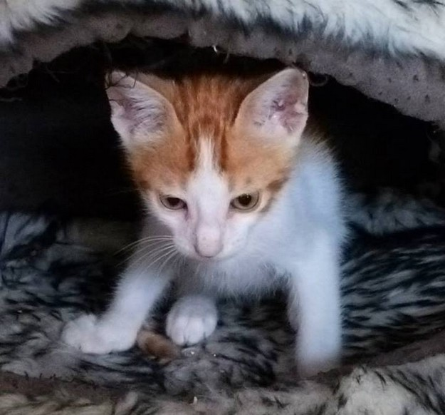 Adorable kittens at Gozo SPCA need loving forever homes