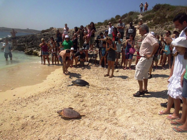 Three turtles released at Hondoq Bay in Gozo by NTM