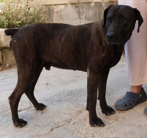 Balou needs a loving forever home to share with someone