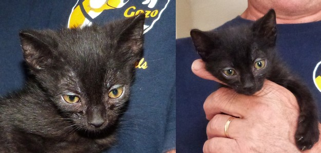 Kittens - Button, Carol and John need loving forever homes