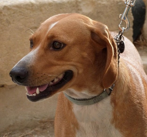 Coucha is waiting at the Gozo SPCA for her forever home