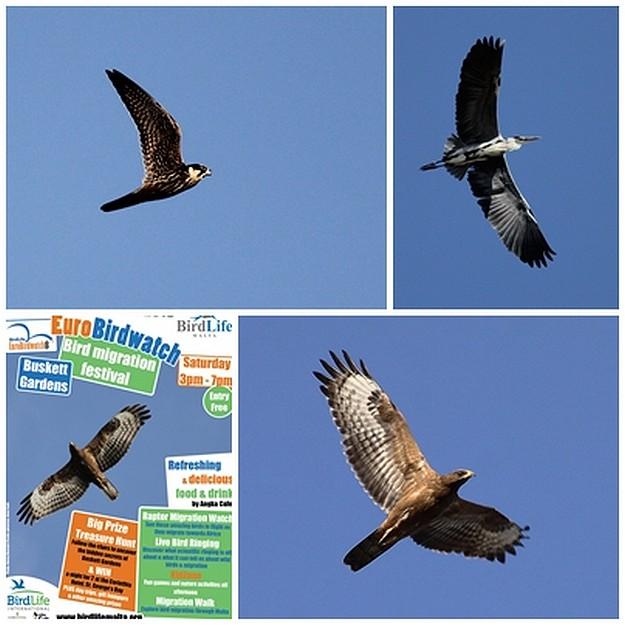 EuroBirdwatch - Buskett Bird Migration Festival this Saturday