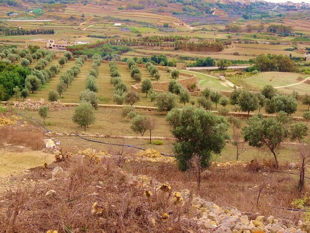 Outline plan on the potential for afforestation of the Maltese islands