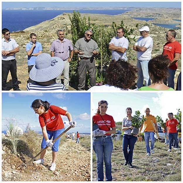 Project to restore maquis habitats at tal-Kuncizzjoni area