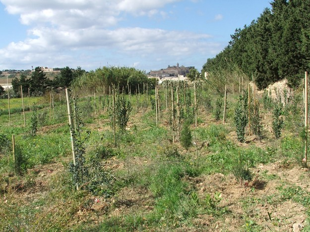 SIMBIOTIC Project in Gozo and Sicily officially concluded