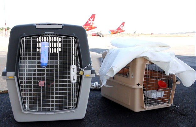 Air Malta pet travel made easier with updated travel policy