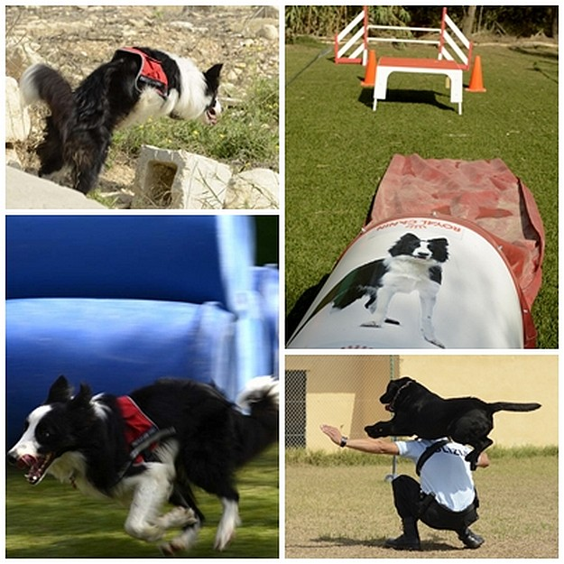 Working dogs seminar is great success for both handlers and dogs