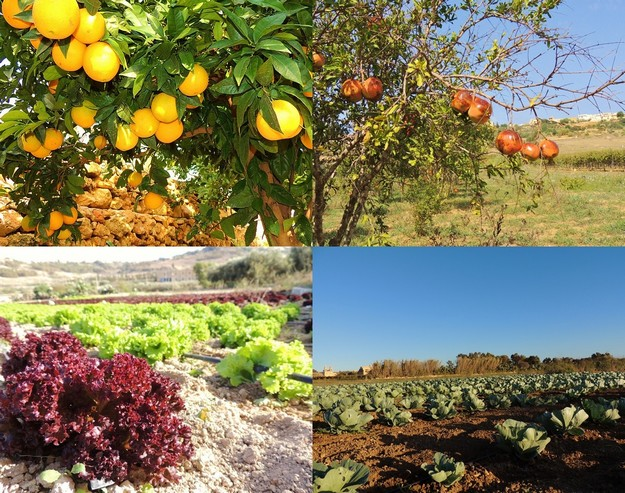 Gozitan farmers contributed 7.2% of total supply of fresh fruit & veg in Q1