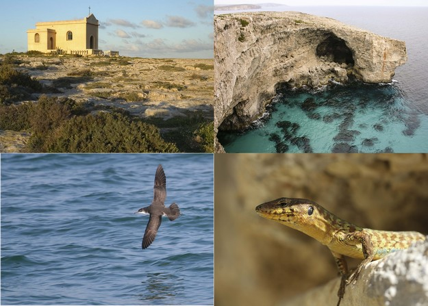 Guided walk and cliff-top clean-up to protect threatened shearwaters