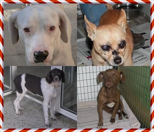 Gozo SPCA sponsorship - A perfect Christmas gift that also helps unwanted animals