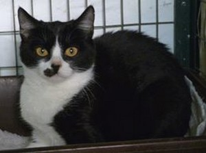 Minnie and Mickey two loving kittens urgently needing forever homes