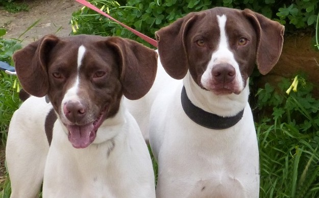Boy and Fritz are waiting for their own forever home