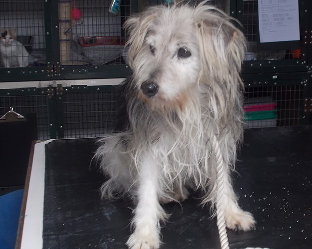 Gozo SPCA appeals for help in tracing the owner of this Yorkie cross