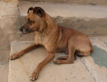 Gozo SPCA collectons on the Gozo ferries this weekend