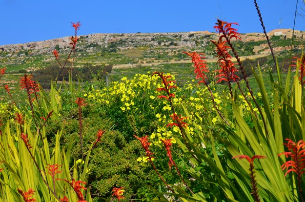 'Gozo' is the theme for March's DOI photo competition