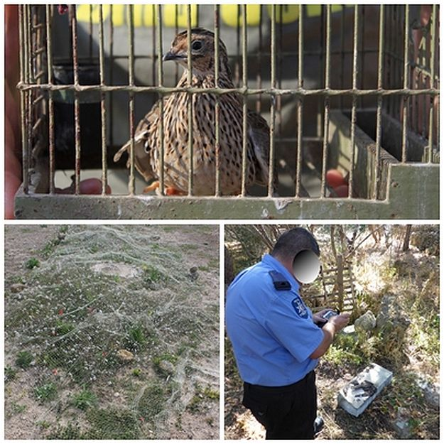 CABS find 'bird cemetery' in Mizieb & Quail trapping site on Gozo