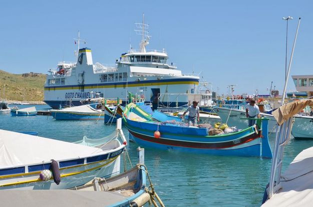 3,775 free palm fronds distributed to Gozitan fishermen