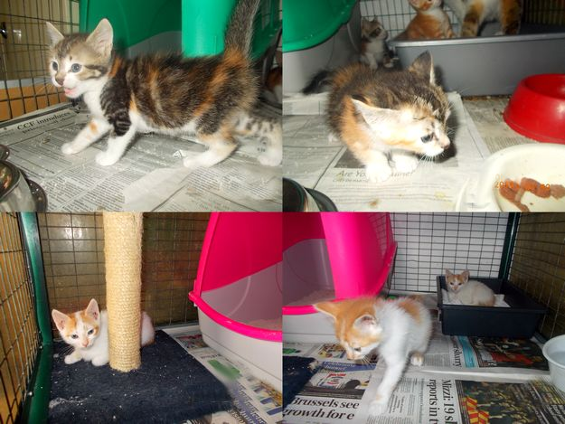 Playful kittens at Gozo SPCA waiting for their own forever homes