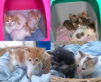 Adorable Kittens ready & waiting at Gozo SPCA for their own loving homes