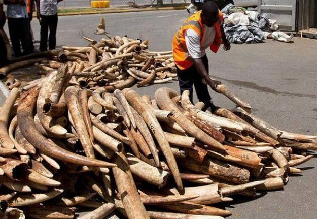 New EU initiative to protect biodiversity and fight wildlife crime