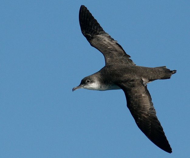 Artificial nest boxes might offer possible lifeline for Malta's endangered seabirds