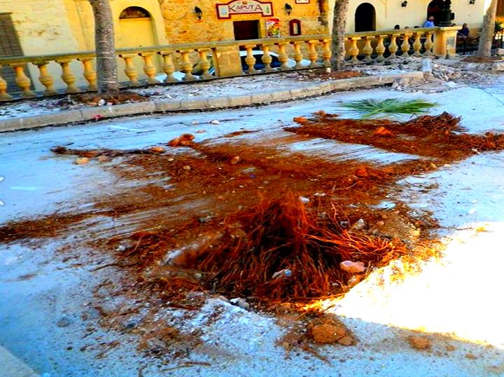 "2 Palm trees ""destroyed & removed"" during Qala Square refurbishment"