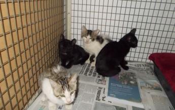 kittens at Gozo SPCA waiting for their own forever loving homes